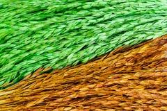 Bunt von getrocknetem Ohr der Reistapete Lizenzfreies Stockbild