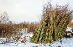 Buntade viden i vintersäsongen Arkivfoton