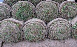Buntar av gräsmarkrullar royaltyfria bilder