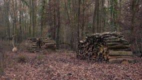 Buntar av vedträ i skog arkivfilmer