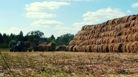 Buntar för hö för lantbruktraktorpäfyllning på jordbruks- fält jordbruks- industri arkivfilmer
