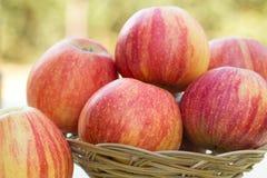 Bunte Äpfel der Äpfel Stockfoto