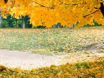 Bunte bunte Ahornblätter des Herbstes, Park Lizenzfreies Stockfoto