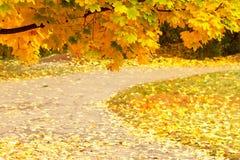 Bunte bunte Ahornblätter des Herbstes, Park Stockfoto
