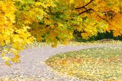 Bunte bunte Ahornblätter des Herbstes, Park Stockfotografie