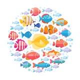 Bunte Aquariumfische eingestellt in Kreisvektor Tropische Fischansammlung Stockfoto