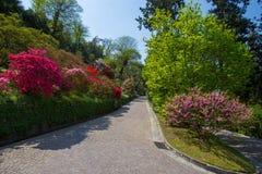 Bunte Azalee im botanischen Garten des Landhauses Taranto in Pallanza, Verbania, Italien lizenzfreies stockfoto