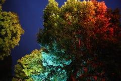 Bunte Bäume lizenzfreie stockfotos
