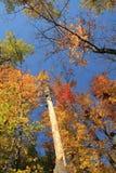 Bunte Bäume lizenzfreie stockfotografie