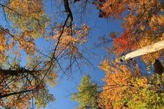 Bunte Bäume Stockfotografie