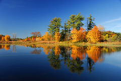 Bunte Bäume des Herbstes unter dem Morgensonnenlicht, das im ruhigen Fluss sich reflektiert Stockbild