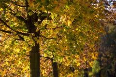 Bunte Bäume im Herbst Lizenzfreies Stockfoto