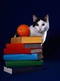 Bunte Bücher, eine Katze und eine Orange auf Blau Stockbilder