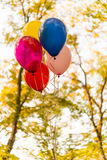 Bunte Ballone im Herbstpark Stockfoto