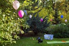 Bunte Ballone Im Hinterhof, Landschaft Stockbilder