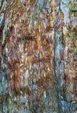 Bunte Barke auf immergrünem Baum Lizenzfreie Stockfotos