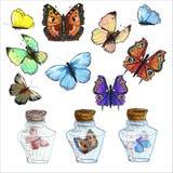 Bunte Basisrecheneinheiten Satz Glaskästen mit Schmetterlingen Stockbilder