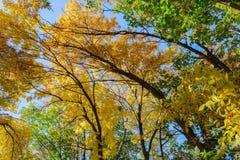 Bunte Baum-Oberseiten Lizenzfreie Stockbilder
