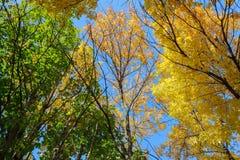 Bunte Baum-Oberseiten Stockbilder