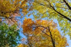 Bunte Baum-Oberseiten Stockfoto
