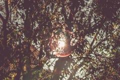 Bunte Baumaste im sonnigen Wald, natürlicher Hintergrund des Herbstes Lizenzfreies Stockfoto