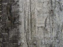 Bunte Baumbeschaffenheit Stockfotos