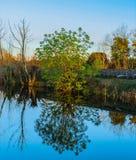 Bunte Baumreflexion im Kanal stockfotografie