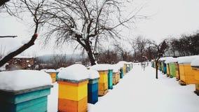 Bunte Bienenstöcke bedeckt im Schnee stock footage