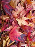 Bunte Blätter Lizenzfreies Stockfoto