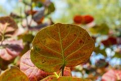 Bunte Blätter Stockbild