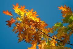 Bunte Blätter Lizenzfreies Stockbild