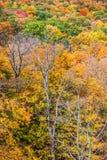 Bunte Blätter auf Abhang Lizenzfreie Stockfotografie
