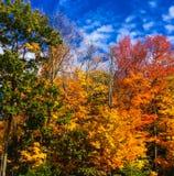 Bunte Blätter auf Bäumen im Fall in Massachusetts Stockfotos