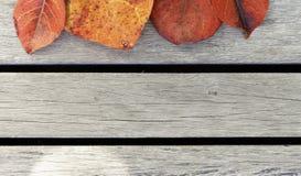 Bunte Blätter auf dem Bretterboden Lizenzfreies Stockfoto