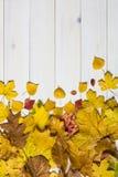 Bunte Blätter auf einem weißen hölzernen Hintergrund Lizenzfreie Stockfotos