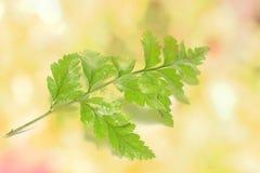 Bunte Blätter auf Hintergrund Lizenzfreie Stockfotografie