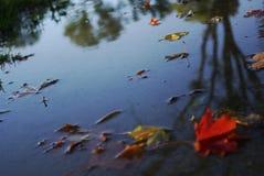 Bunte Blätter auf schlammigem Pfad stockbild