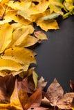 Bunte Blätter auf schwarzem Hintergrund Lizenzfreie Stockbilder