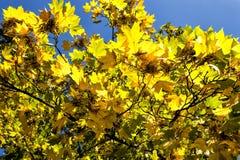 Bunte Blätter, Bäume, Rasen, etc Stockbild
