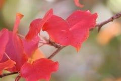Bunte Blätter, Bäume, Rasen, etc Lizenzfreie Stockfotos