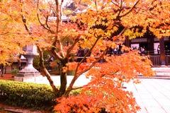 Bunte Blätter, Bäume, Rasen, etc Lizenzfreies Stockfoto