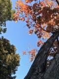 Bunte Blätter, Bäume, Rasen, etc Stockfotografie