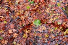 Bunte Blätter, Bäume, Rasen, etc Stockfotos