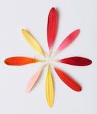 Bunte Blätter der Blume in der runden Form Lizenzfreie Stockfotografie
