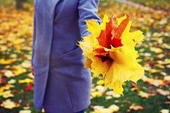 Bunte Blätter in der Hand des jungen Mädchens an der Herbstparknahaufnahme Frau mit Gelbem und Rot verlässt gegen Fall im Park Lizenzfreie Stockfotos