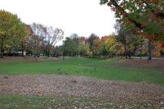 Bunte Blätter in der Herbst-Jahreszeit lizenzfreie stockfotografie