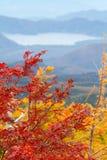 Bunte Blätter in der Herbst-Jahreszeit lizenzfreie stockfotos