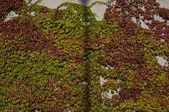 Bunte Blätter des Herbstes Stockfotos