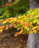 Bunte Blätter in einem foest lizenzfreies stockbild