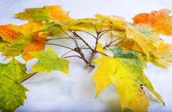 Bunte Blätter im Fall auf hölzernes Brett der bunte Hintergrund Lizenzfreie Stockfotos